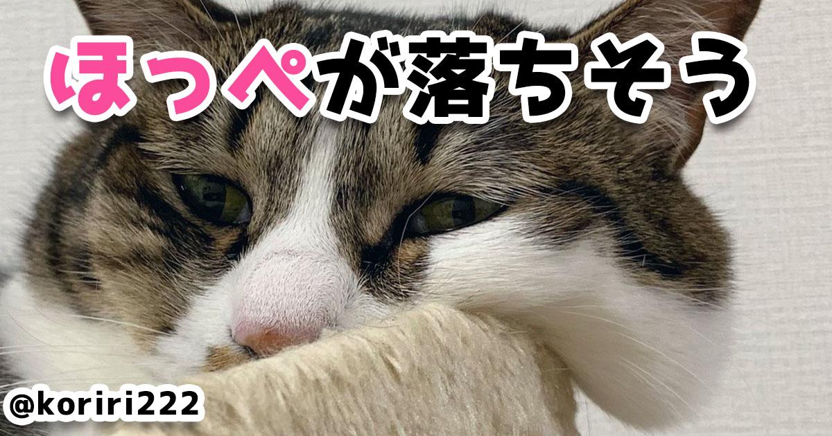 どの仕草も人間をトリコにする!とにかくネコのかわいさを見てくれ 7選