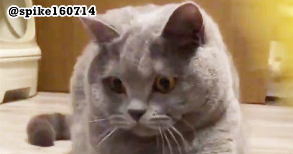 【おわかりいただけるだろうか】ご主人と遊ぶネコの動画に映ったのは...