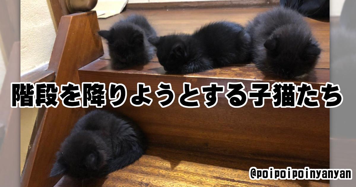 まっくろくろすけかな?「黒猫」が魅力たっぷりだとわかる画像 8選