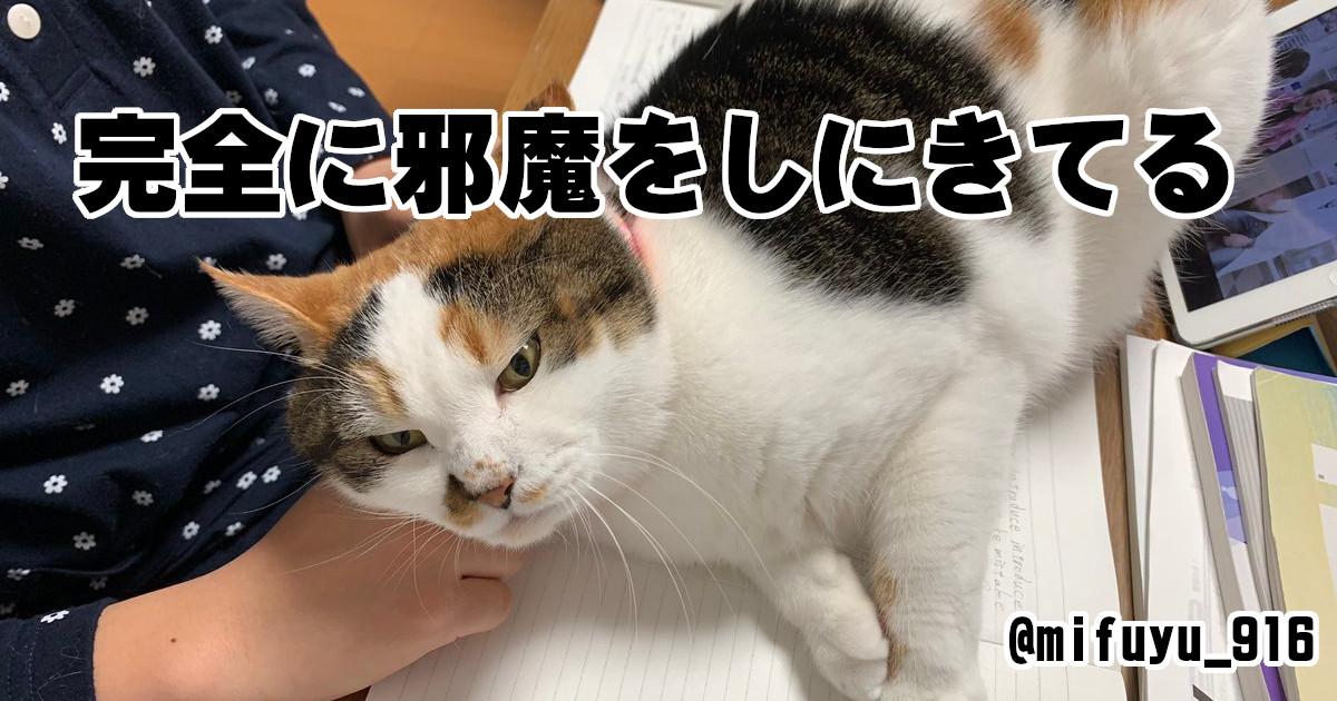 飼い主の嬉しい悲鳴!「とにかく邪魔してくるネコ」がカワイイ 7選