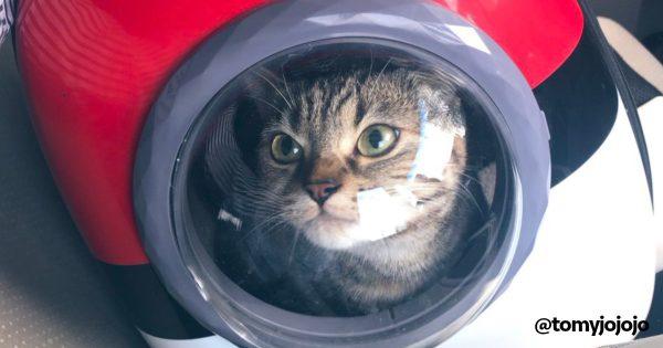 モンスターボール型リュックに入る猫がかわいい