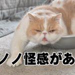 かわいいだけじゃないにゃ!笑いも癒しも兼ねそろえたネコちゃんたち 7選