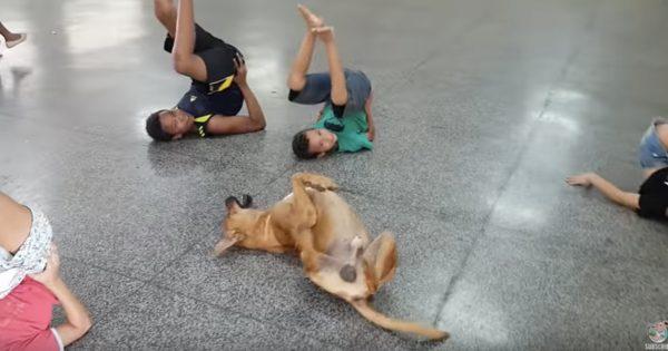犬がダンスの授業に参加!子供のマネをして踊る姿に笑う