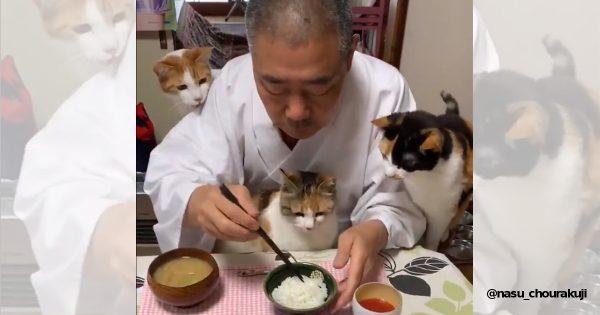たくさんの猫に囲まれた住職の朝ごはんが超うらやましい…