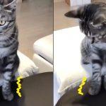 ネコは「人間用マッサージ機」の快感と興奮を覚えてしまった
