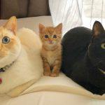 なんだよ幸せかよ!3匹の猫の「川の字ショット」にメロメロが止まらん