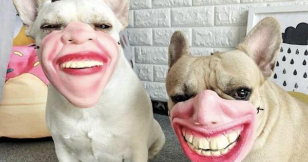 軽いホラー...👻 海外で話題の「犬用マスク」がクレイジーすぎる