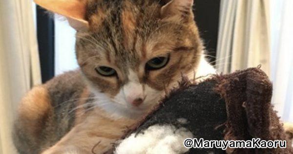 因縁の対決🔥「猫をダメにするソファ」と「ソファをダメにする猫」