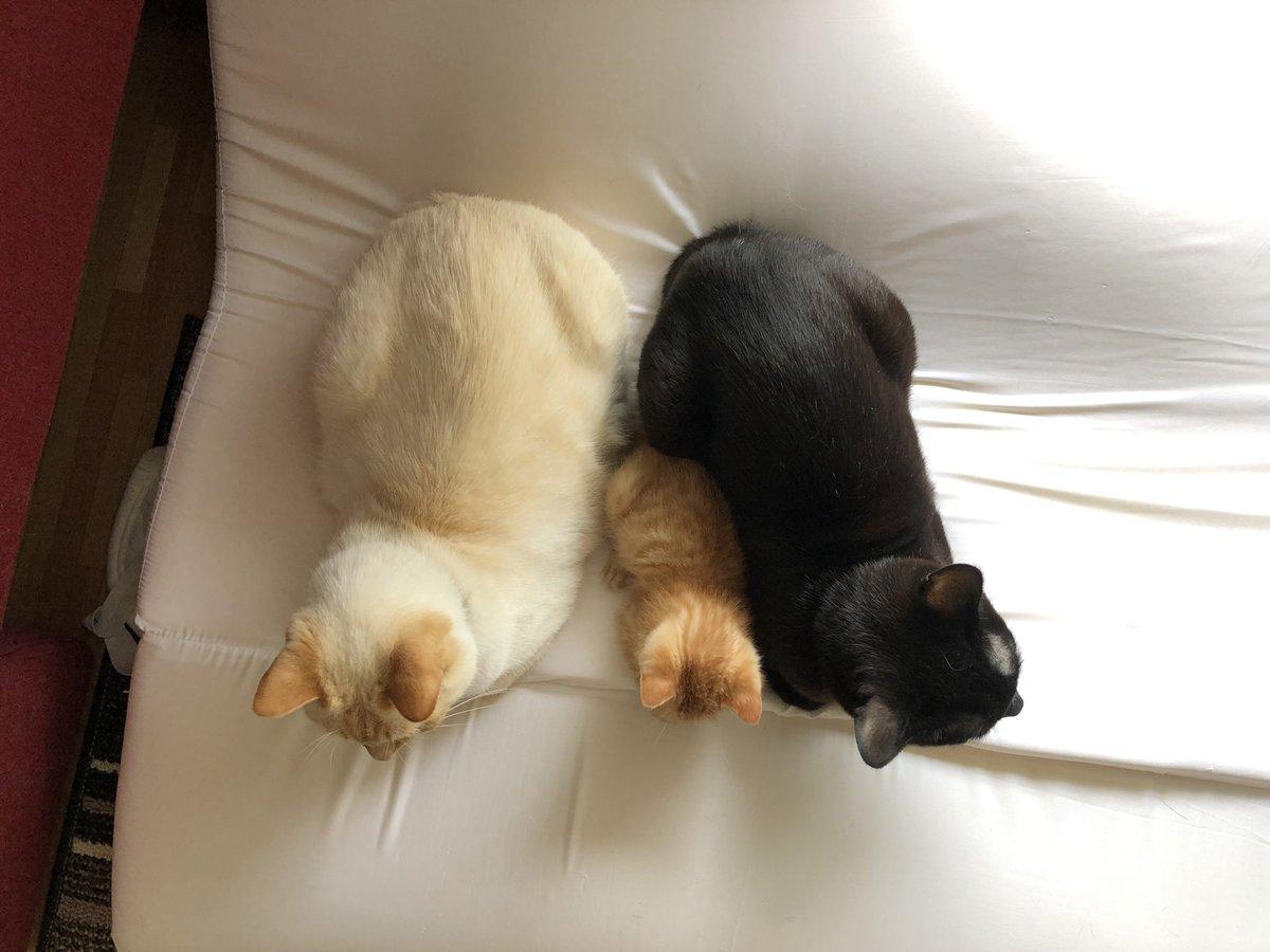 クレイジー:並ぶ猫4