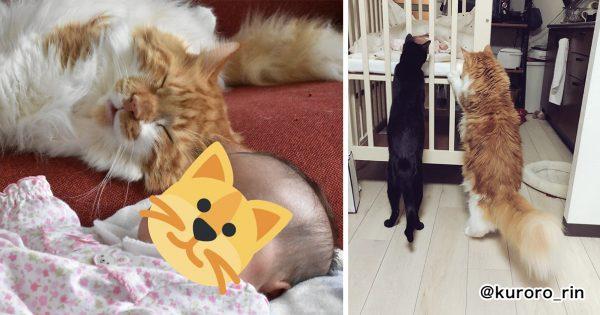 担当制で「赤ちゃんの子守」をする3匹のネコになんかもう幸せしか感じない