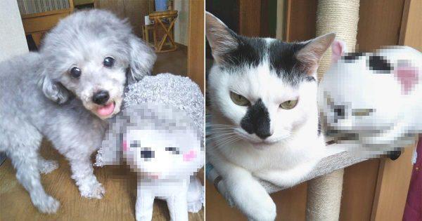 愛犬と愛ネコを人形にしてみた → 激似すぎて笑った