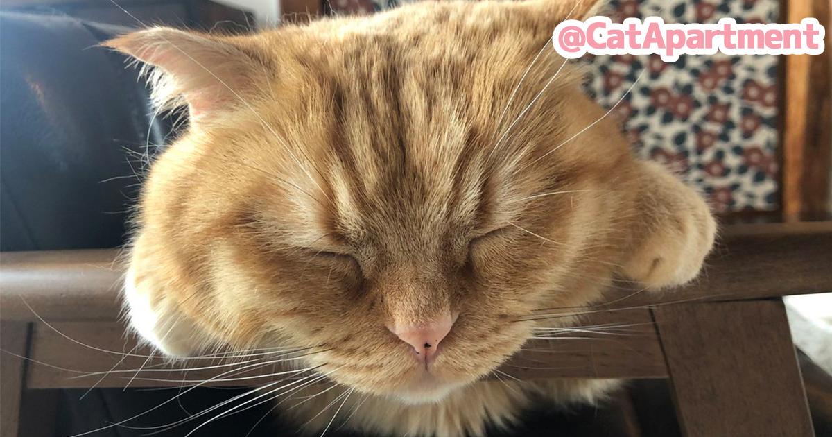 眠っているネコがたまらん!見てるこっちまでスヤァっとなる至福の寝顔 10選