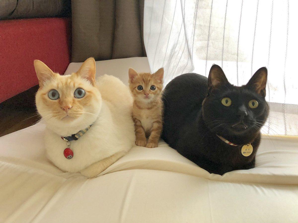 クレイジー:並ぶ猫1