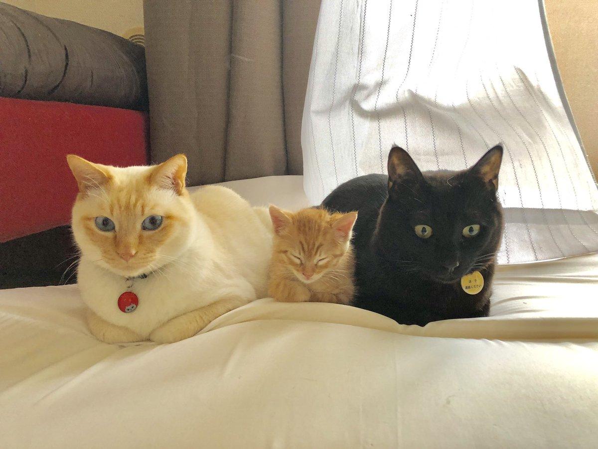 クレイジー:並ぶ猫2