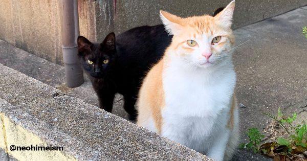 茶トラ猫に話しかけていると1匹の黒猫が近づいてきて...