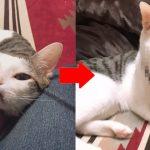 猫にフィルターかけて写真を撮ったらスゴいことにwww