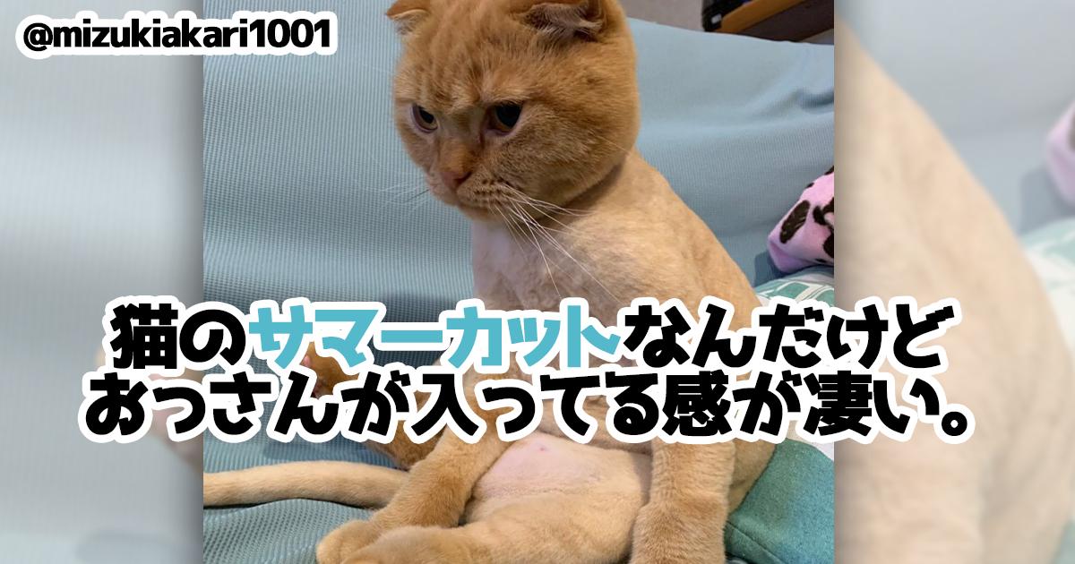 「未確認生命体だ!」と思ったら全部ネコじゃん 8選