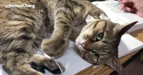 【15万いいね】自分のかわいさを熟知したネコに母性本能噴火🌋