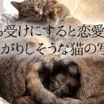 かわいさ倍増の破壊力!こっちまで幸せになる「仲良しネコ」7選
