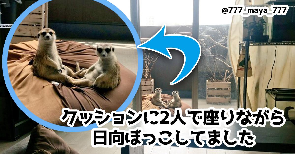 人間に必要なリラックス術を「くつろぐ動物」に教えてもらおう 7選