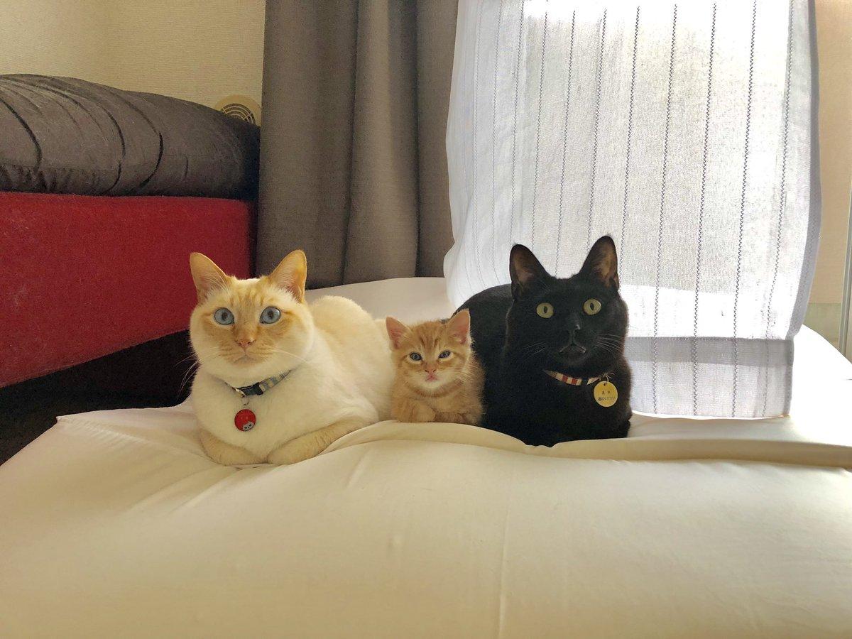 クレイジー:並ぶ猫3