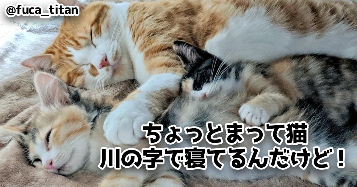 爆睡するネコの破壊力がヤバイ 7選