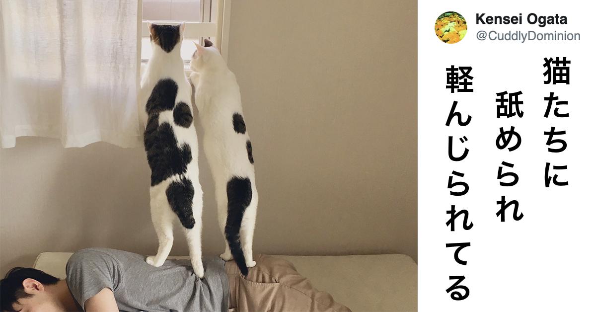 「人間はネコに下手に出る」とわかる画像 7選