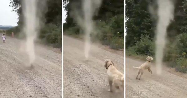 犬は「つむじかぜ」に猛アタックする🌪🐩