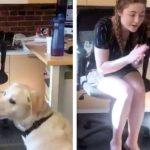 耳の聞こえない女性は、愛犬と「手話」で通じ合う(90万いいね)