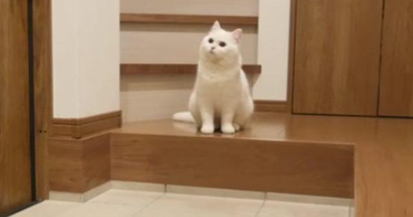 【隠し撮り】お留守番中のネコの様子を撮影した結果がこちら