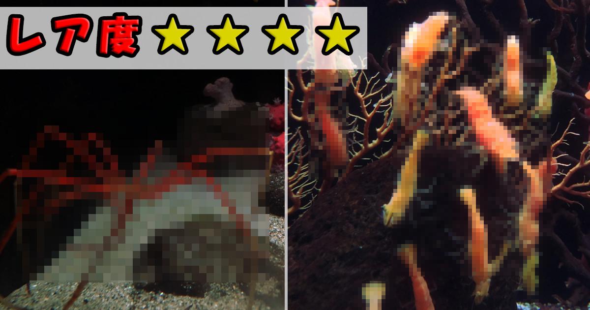 キモカワ!なかなか見られない激レアな海の珍生物 7選