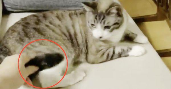 【検証】猫のしっぽを投げてみた