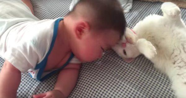 赤ちゃんとネコ