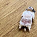 海外「この子犬でコラ画像作ろうぜ」フォトショ職人の作品に爆笑