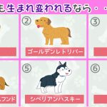 【心理テスト】生まれ変われるとしたら…どの犬になる?