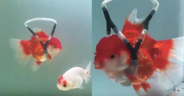 goldfishes02