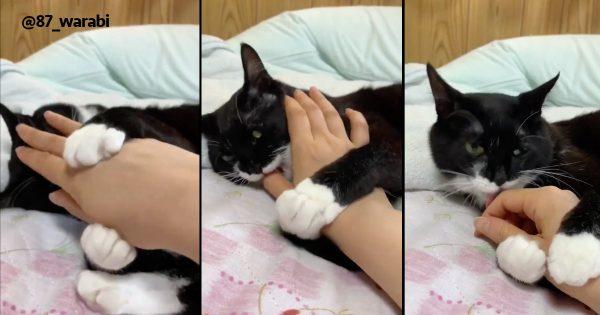 猫のフルコース