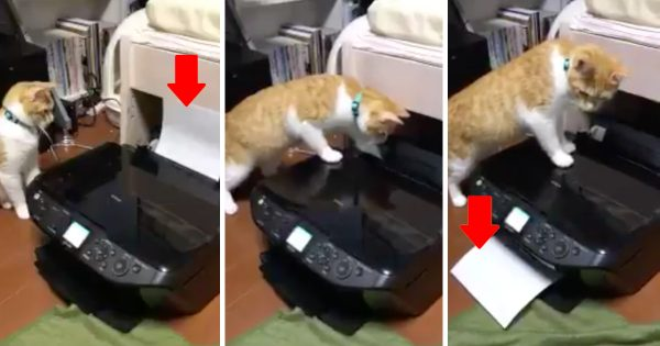 ネコ先輩、プリンターに翻弄されててかわいいww