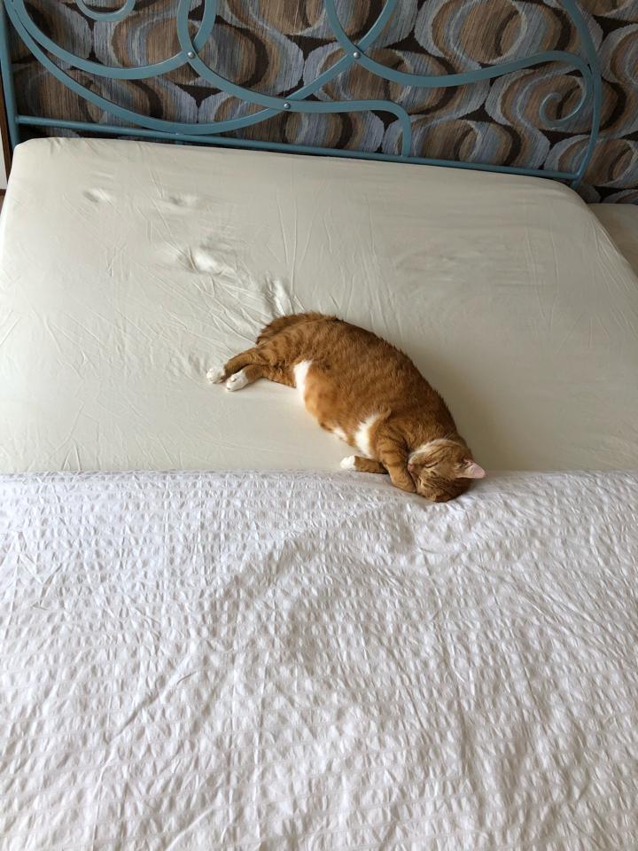 猫 かわいい 寝てる
