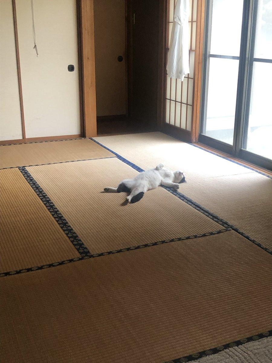 猫 家 くつろぐ 笑う