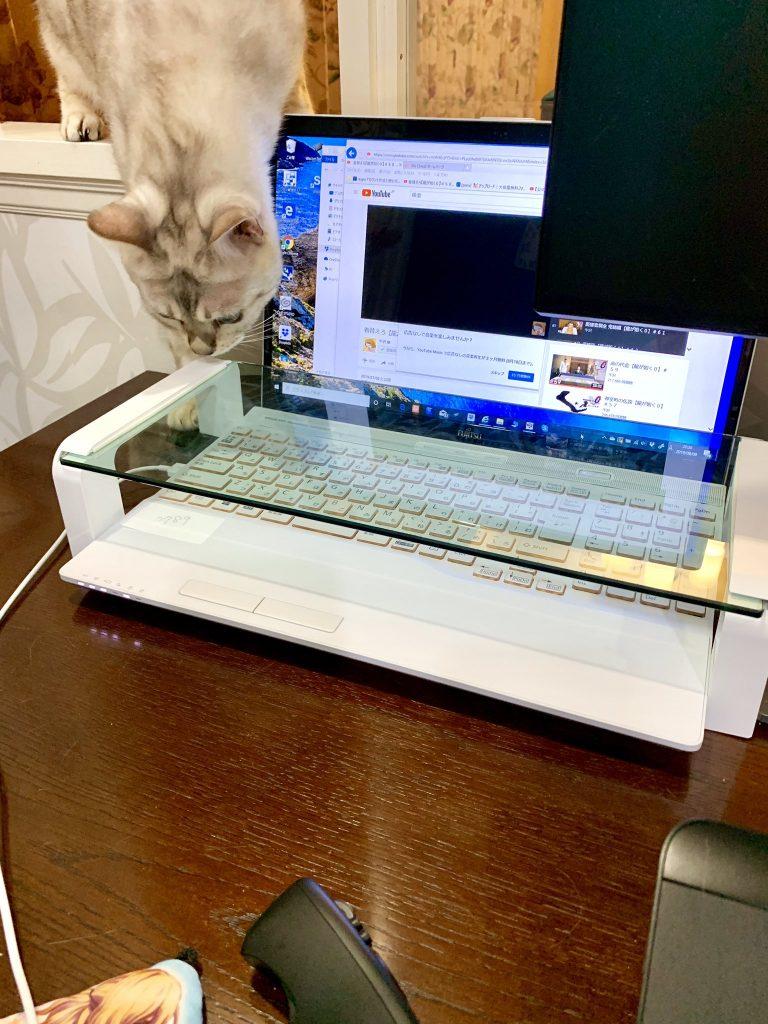 ネコ パソコン 邪魔