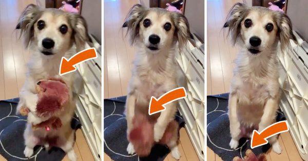 飼い主が外出するときの犬の反応