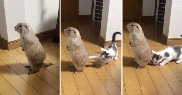 プレーリードッグと猫の「テンションの落差」がナイアガラ並み
