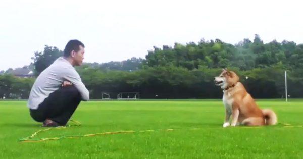 【23万いいね】柴犬とご主人のやりとりがほぼ4コマ漫画