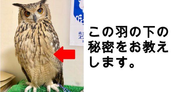フクロウの秘密
