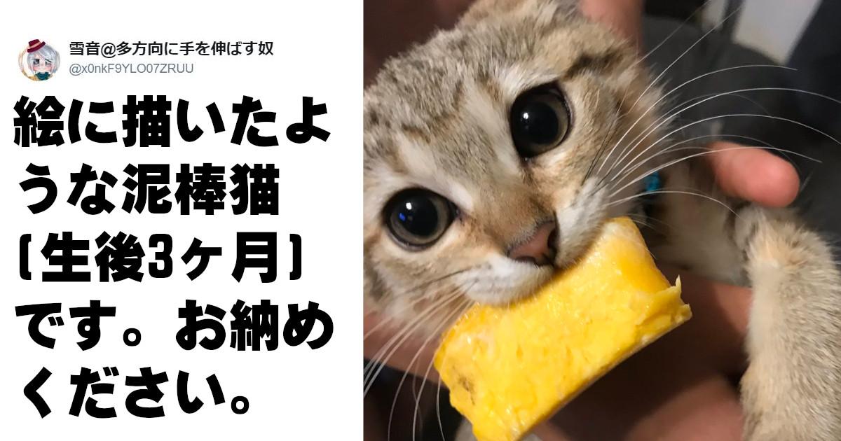 人間の泥棒には怒りの感情しか湧かないのになんで動物の泥棒ときたらこんなにも愛おしいんだろうか 7選