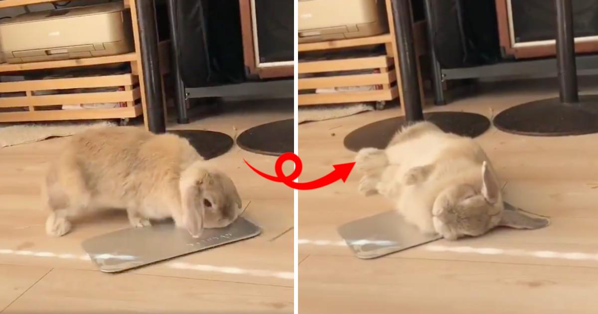 ウサギが実践する「暑さ対策」がかわいすぎる