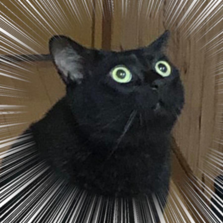 ドローン ネコ びっくり
