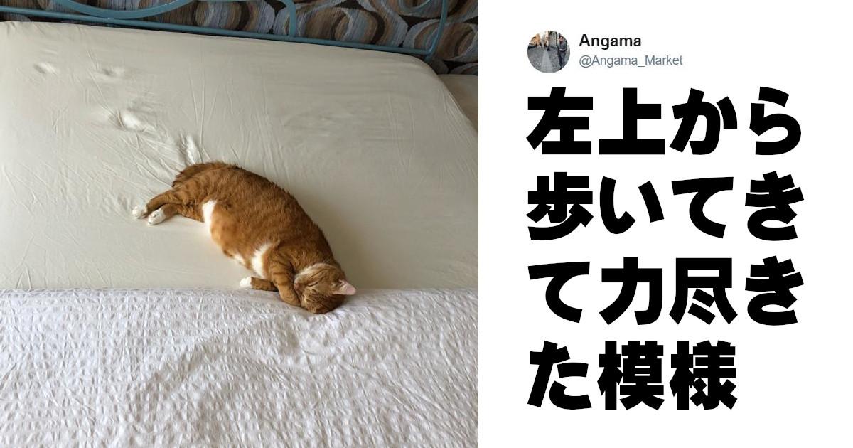 まだ寝な... スヤァ(˘ω˘ ) 眠さに抗えなかった「寝落ち猫」7選