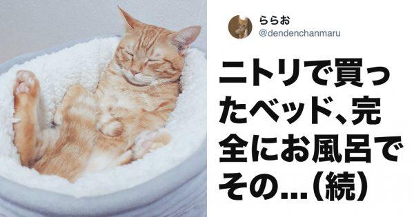 猫は「ニトリのベッド」に乗るとかわいさが5億倍になると思う